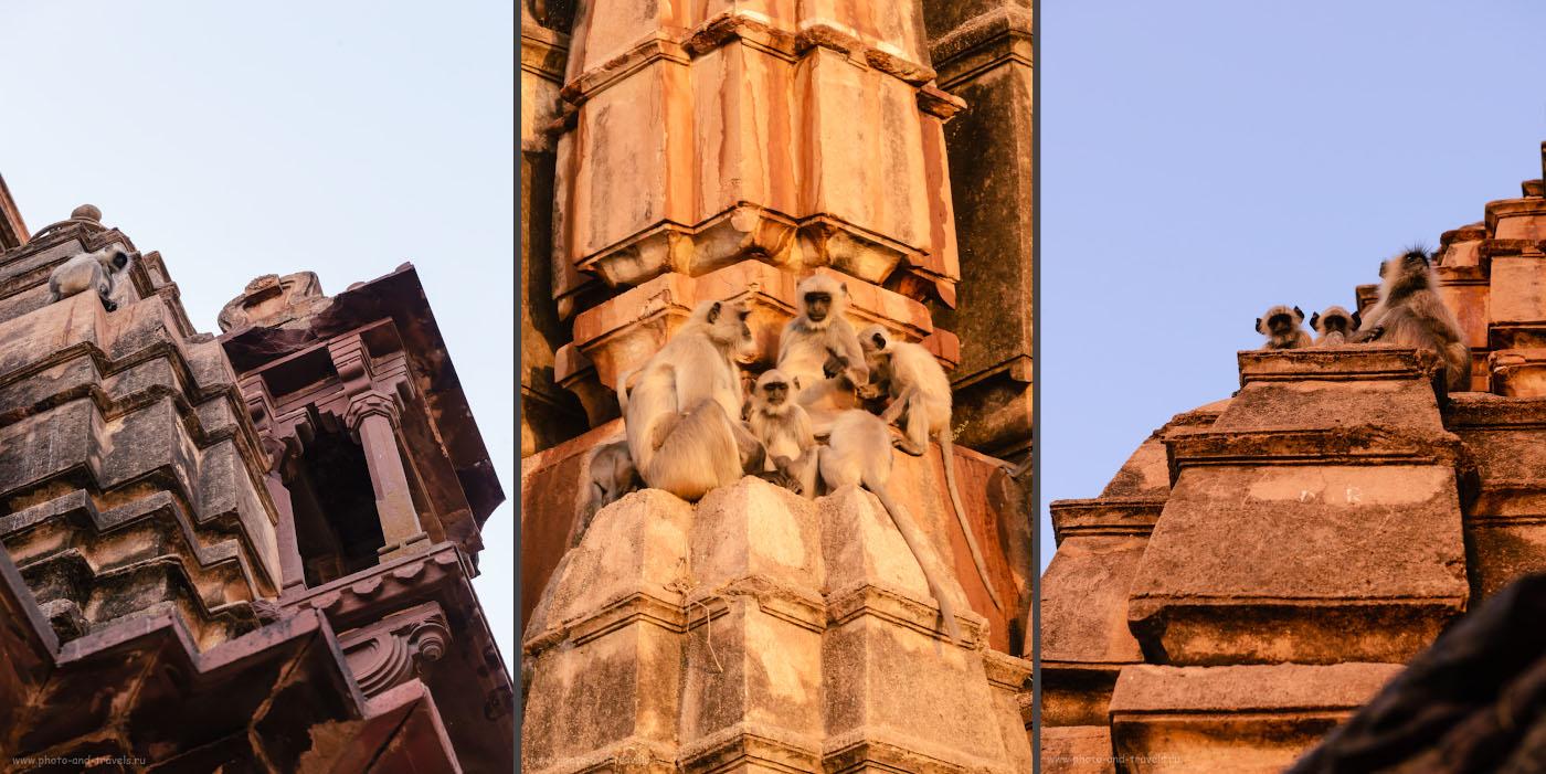 Фото 16. На крыше храма Чатурбхудж Мандир в Орчхе много обезьян. Отчет о путешествии по Центральной Индии самостоятельно.