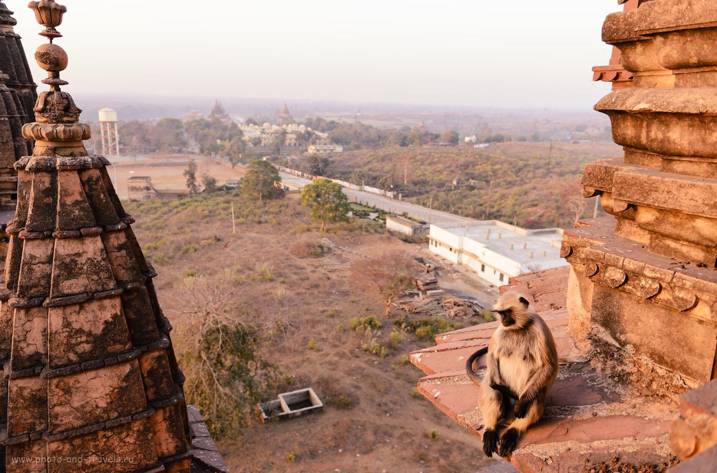 Снимок 17. Утро на крыше храма Чатурбхудж Мандир в Орчхе. 1/125, 2.8, 100, 24.