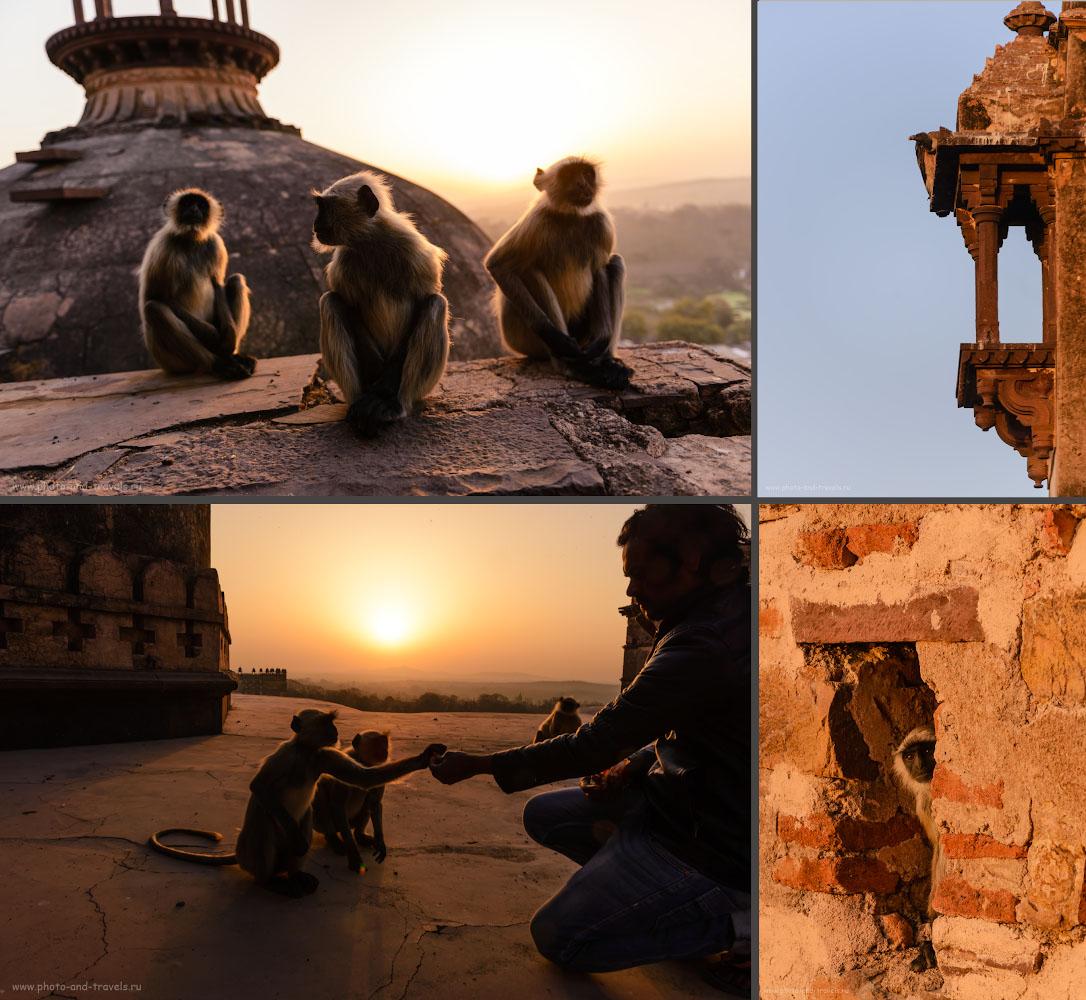 Фото 18. Рассвет на крыше храма Чатурбхудж Мандир. Навсегда запомню это утро в Орчхе.