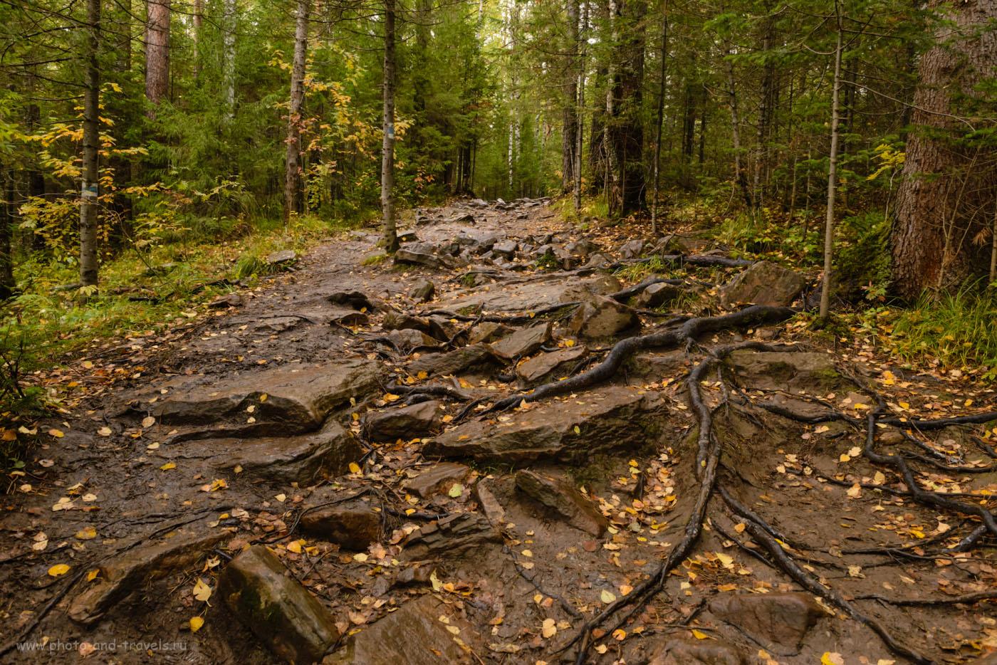Снимок 4. Как выглядит тропа в национальном парке «Таганай». Подъем на участке «Пыхтун». 1/160, -1.0, 8.0, 2000, 24.
