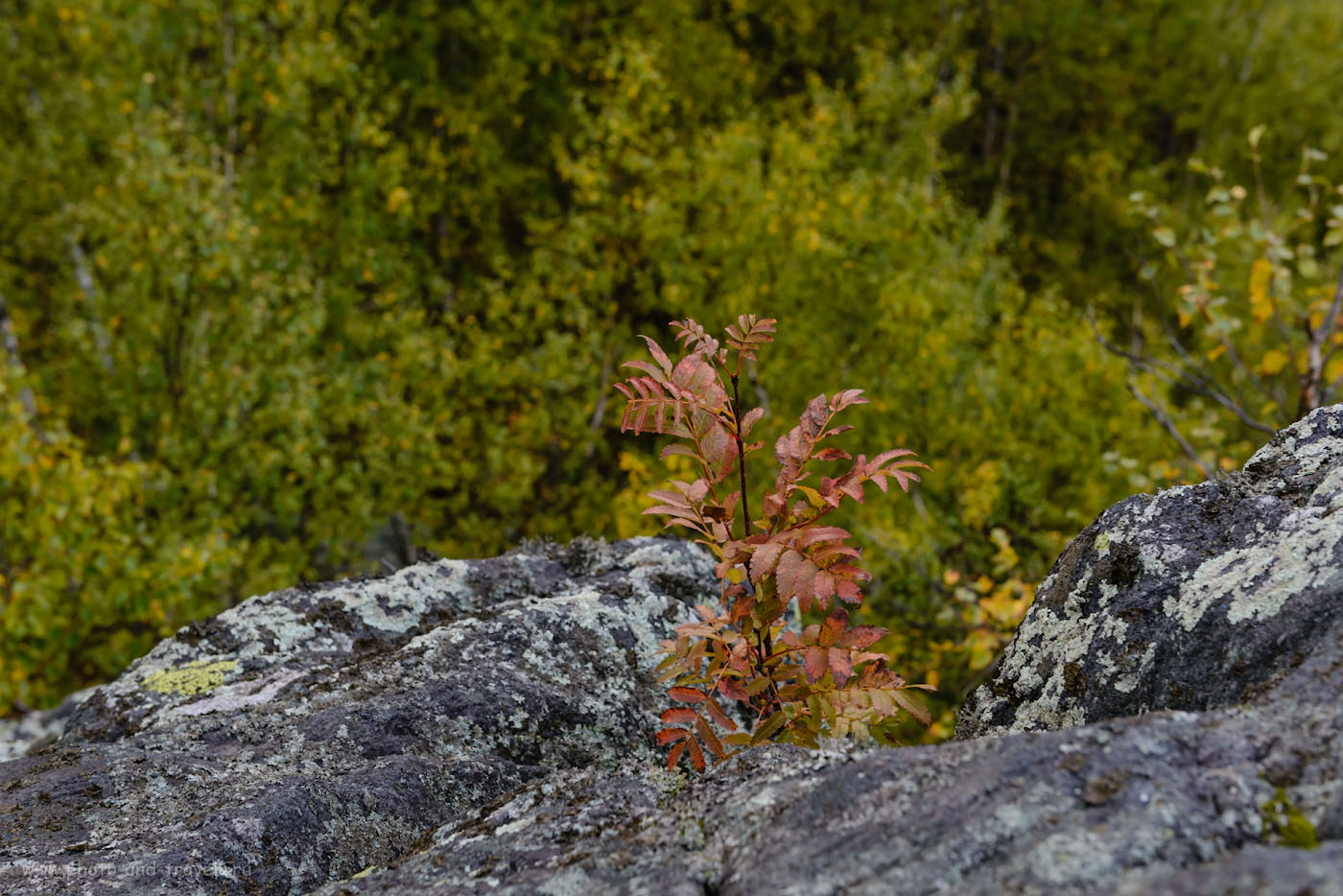 Фотография 8. Золотая осень на Таганае еще не наступила. 1/160, -0.67, 8.0, 720, 56.