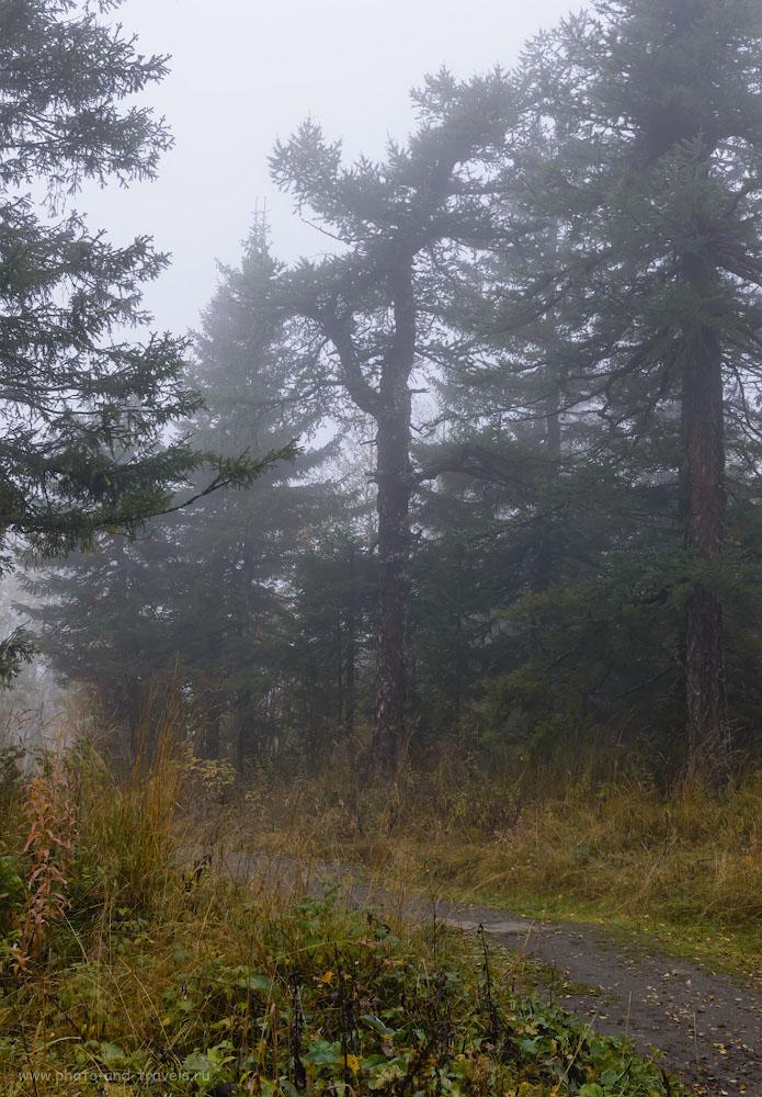 Фото 19. Лиственницы и туман придают таинственность этому месту. Отзывы туристов об экскурсии на Черную скалу. 1/160, -1.0, 9.0, 560, 44.