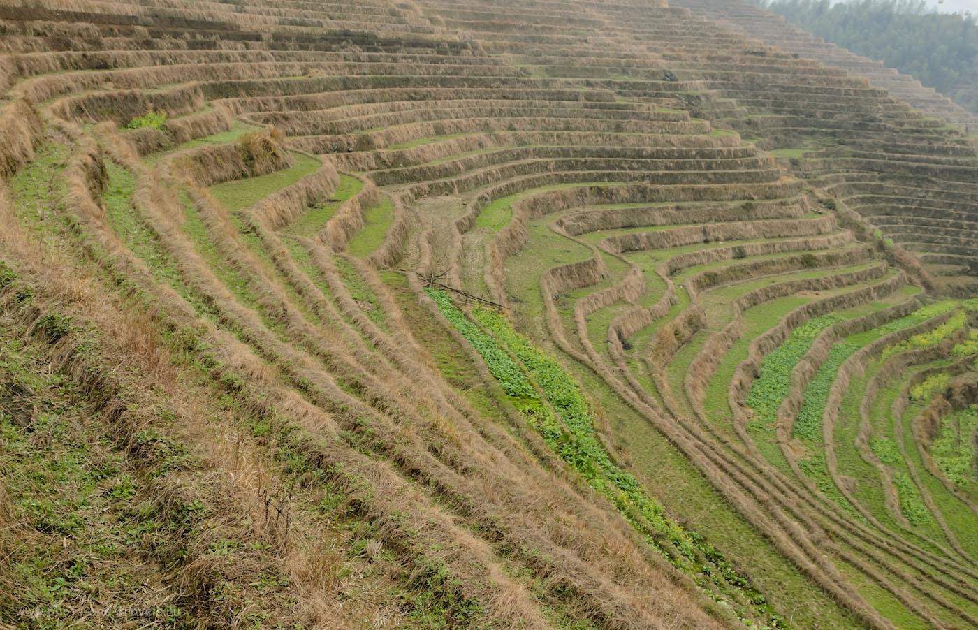 Фото 3. Туры в Китай самостоятельно. Рисовые террасы Longji Rice Terraces во второй половине марта
