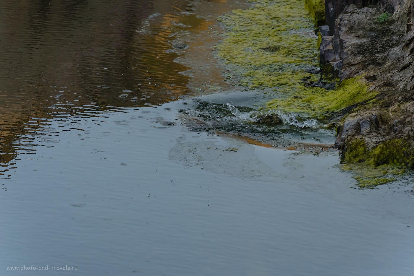 Фото 11. Когда на фотоохоте изменила удача. Как мы искали крокодила в каньоне реки Кен, что у водопадов Ранех. 1/640, -0.67, 9.0, 2500, 280.