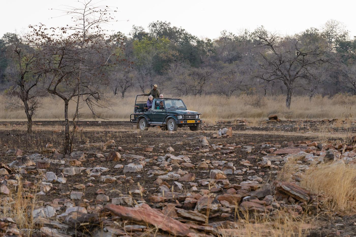 Фотография 2. Джип-сафари в национальном парке «Панна», что рядом с деревней Кхаджурахо. 1/200, 9.0, 2500, 100.