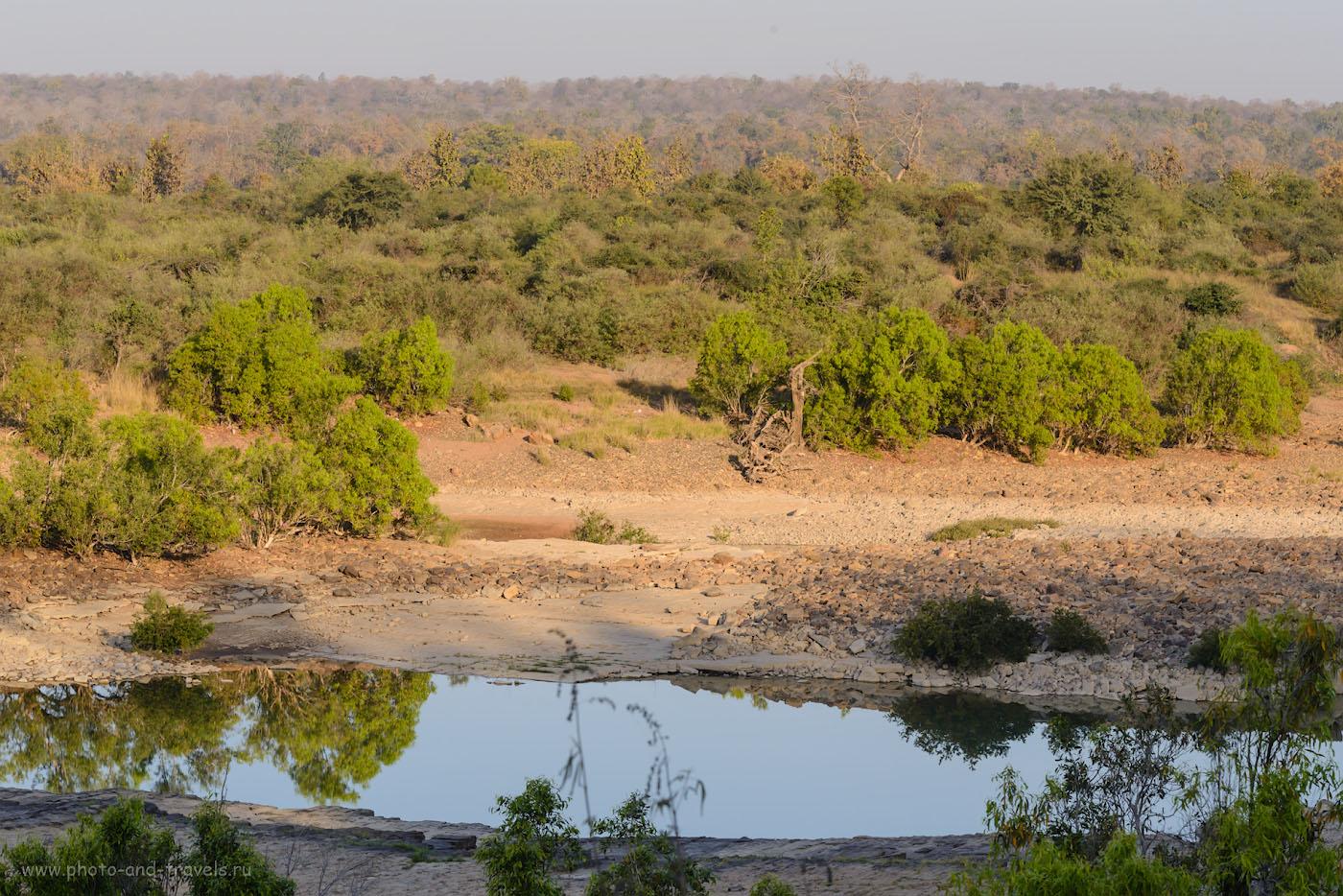 Фотография 10. Где-то на том берегу, спрятанный в густой растительности, смотрит на тебя, читатель, бенгальский тигр. Заповедник Panna National Park. 1/250, 13.0, 450, 116.