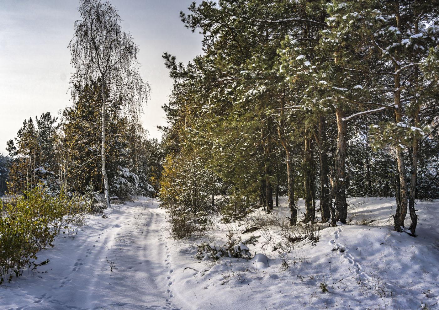 Фото 4. Зимний пейзаж на беззеркалку Sony A6000 с КИТовым объективом Sony 16-50mm f/3.5-5.6. Параметры съемки: 1/320, -1.0, 11.0, 100, 25.