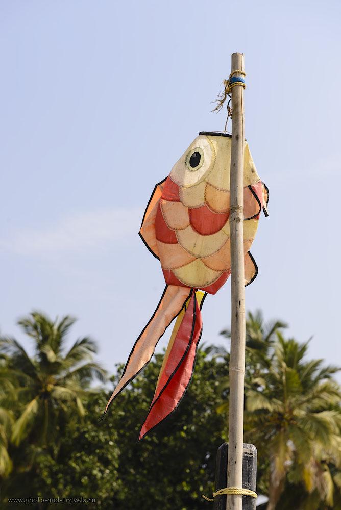 Фотография 10. Отправляясь в Индию в отпуск, можно быть уверенным, что морепродуктов наедитесь вволю. 1/250, 8.0, 100, 70.