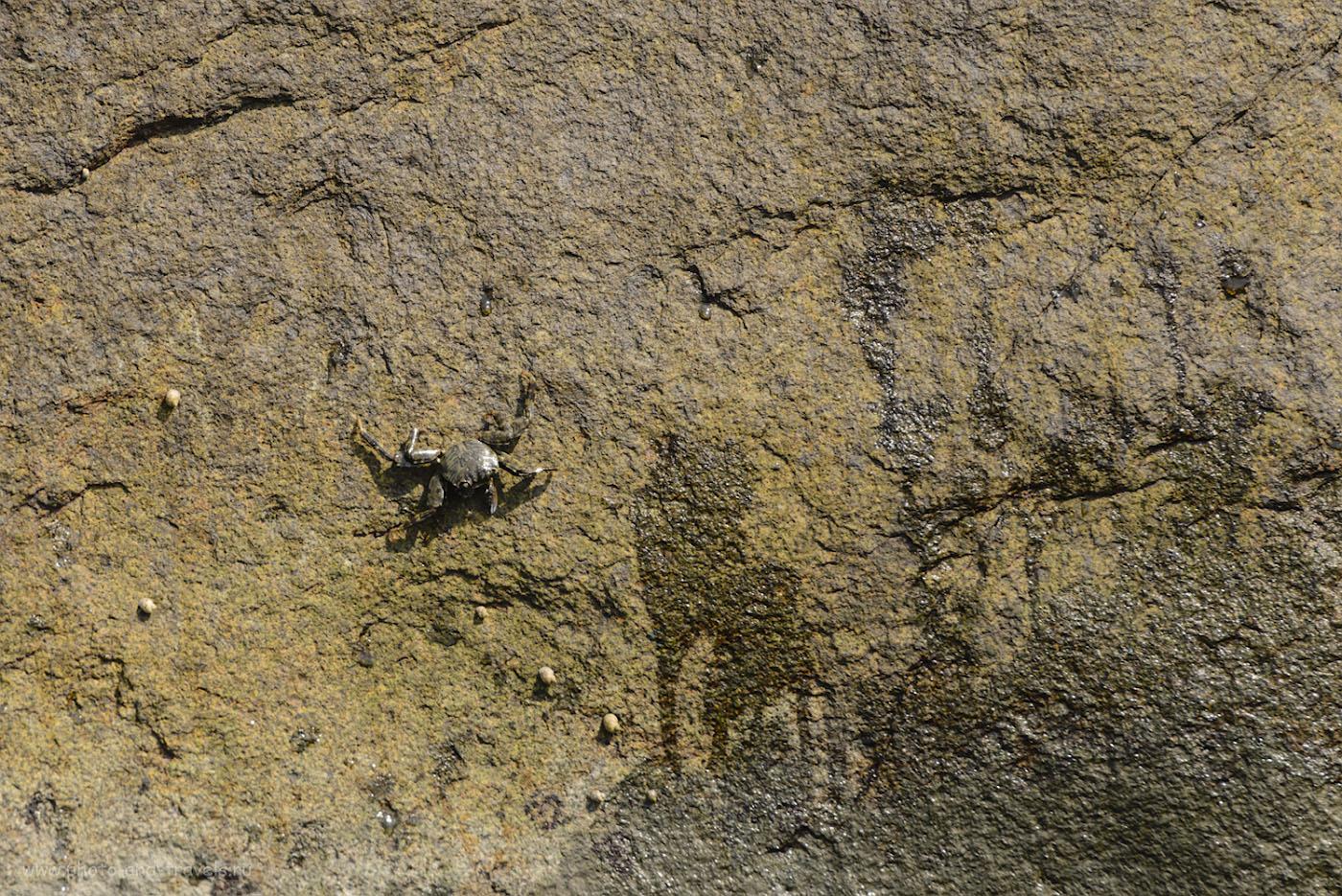 Фотография 15. Результат моей охоты в северной части пляж Палолем. 1/200, +0.33, 9.0, 100, 280.