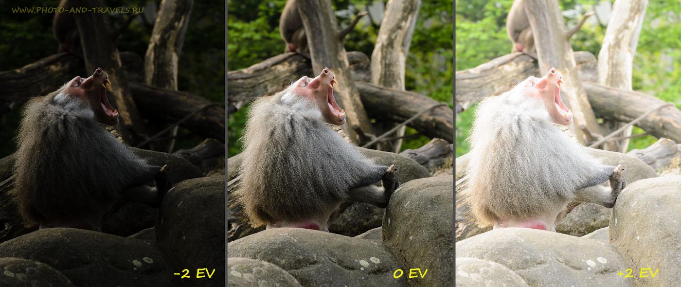Фото 2. Учимся настраивать цифровой фотоаппарат. Примеры снимка с нормальной, недостаточной и избыточной экспозицией. Снято на Nikon D5100 с телеобъективом Nikon 70-300mm f/4.5-5.6.
