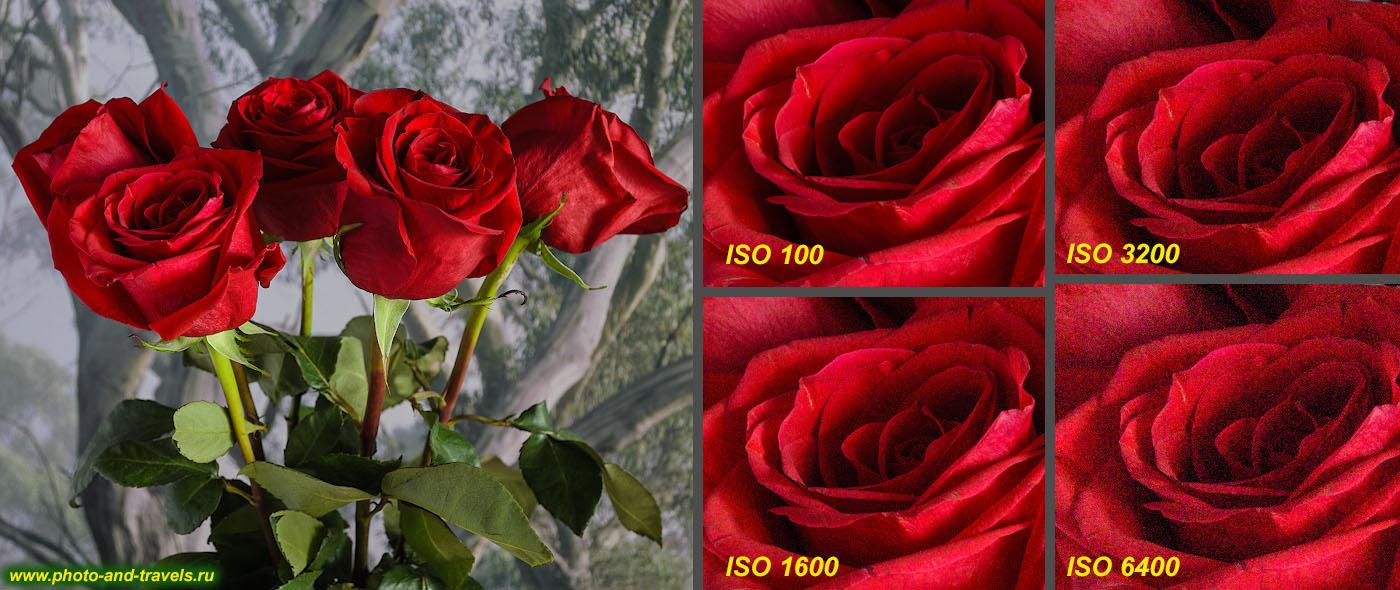 Фотография 6. Изучаем настройки фотоаппарата. Влияние высокого ISO на ухудшение картинки. В правой части видим участки изображения, снятого на зеркальный фотоаппарат Nikon D5100 KIT 18-55 в масштабе 1:1. Фотоурок для начинающих фотографов.