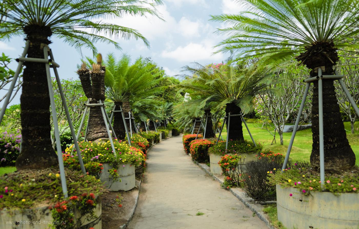 Снимок 7. Пальмовая аллея в Парке Миллионолетних Камней в Паттайе. Отзывы туристов об отдыхе в Таиланде. 1/320, 2.8, 100, 19.