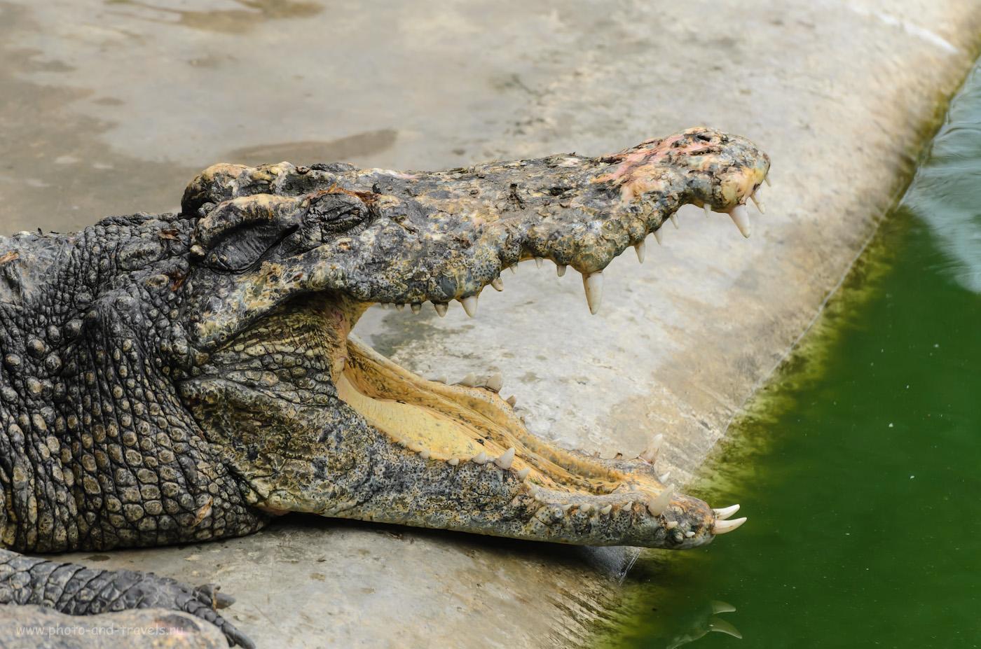 Фотография 12. Фотоохота на крокодилов. Отзыв об экскурсии на крокодиловую ферму в Парке миллионолетних камней. Отдых в Паттайе самостоятельно. Вторая поездка в Таиланд. 1/500, 5.6, 320, 195.