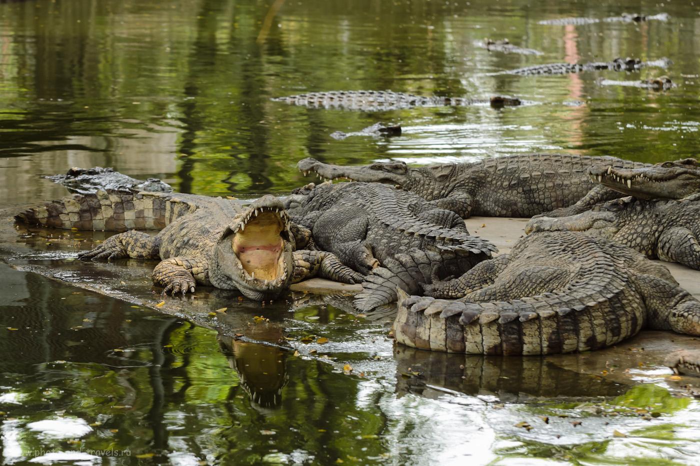 """Фото 13. Как посмотреть крокодилов в парке """"The million years stone park & pattaya crocodile farm"""". Отчет о путешествии в Таиланд. Чем заняться в Паттайе. 1/200, 5.6, 320, 110."""