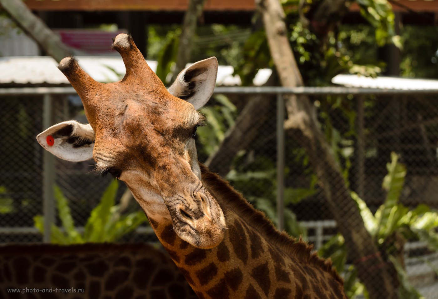 Фото 16. Приходите в Парк миллионолетних камней и крокодиловую ферму еще! Отчет об отдыхе в Паттайе во время поездки в Таиланд. 1/640, 5.0, 320, 100.
