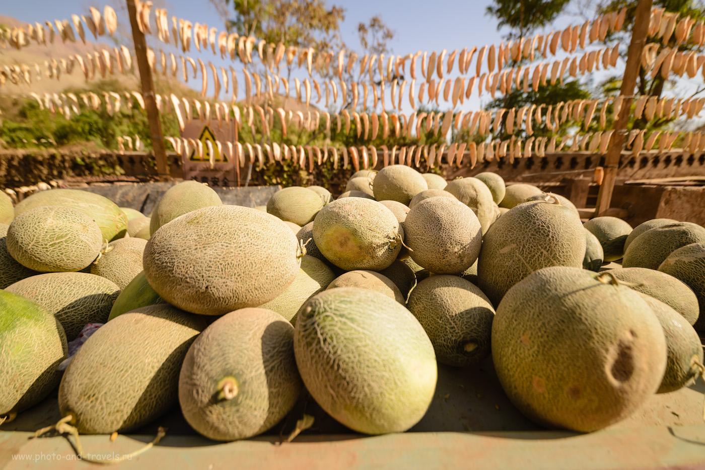 Фото 24. В Турфане не только виноград, но и дыни хорошо растут. Можно отведать и свежие и сушеные. Камера Nikon D610, объектив Samyang 14mm f/2.8. Параметры съемки: 1/1250, 2.8, 100, 14.