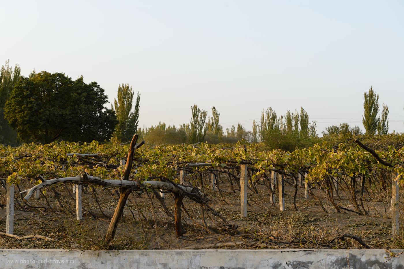 Фото 16. Турфан славится на весь Китай своим виноградом. Отзывы туристов о путешествии в Синьцзян-Уйгурский автономный регион. Интересные места в окрестностях Урумчи. 1/125, -1.0, 8.0, 320, 62.