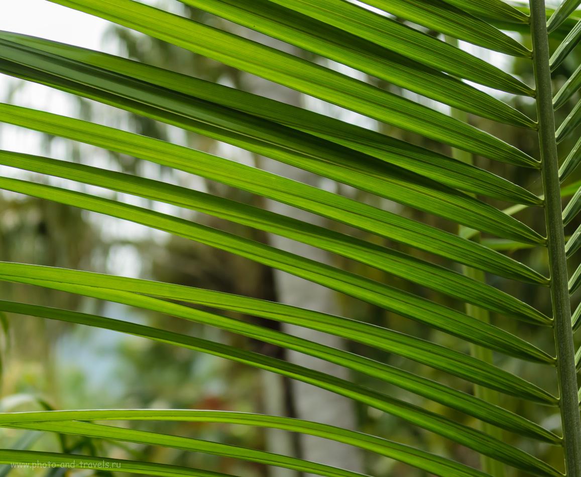 10. Жалюзи. Необычные экскурсии в Паттайе. Поездка в тропический парк Нонг Нуч в Таиланде самостоятельно.
