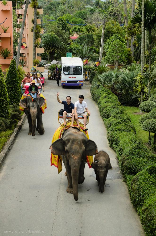 11. Катание на слонах в парке Нонг Нуч (Nong Nooch Tropical Botanical Garden) в Паттайе. Отзывы туристов об отдыхе в Таиланде.