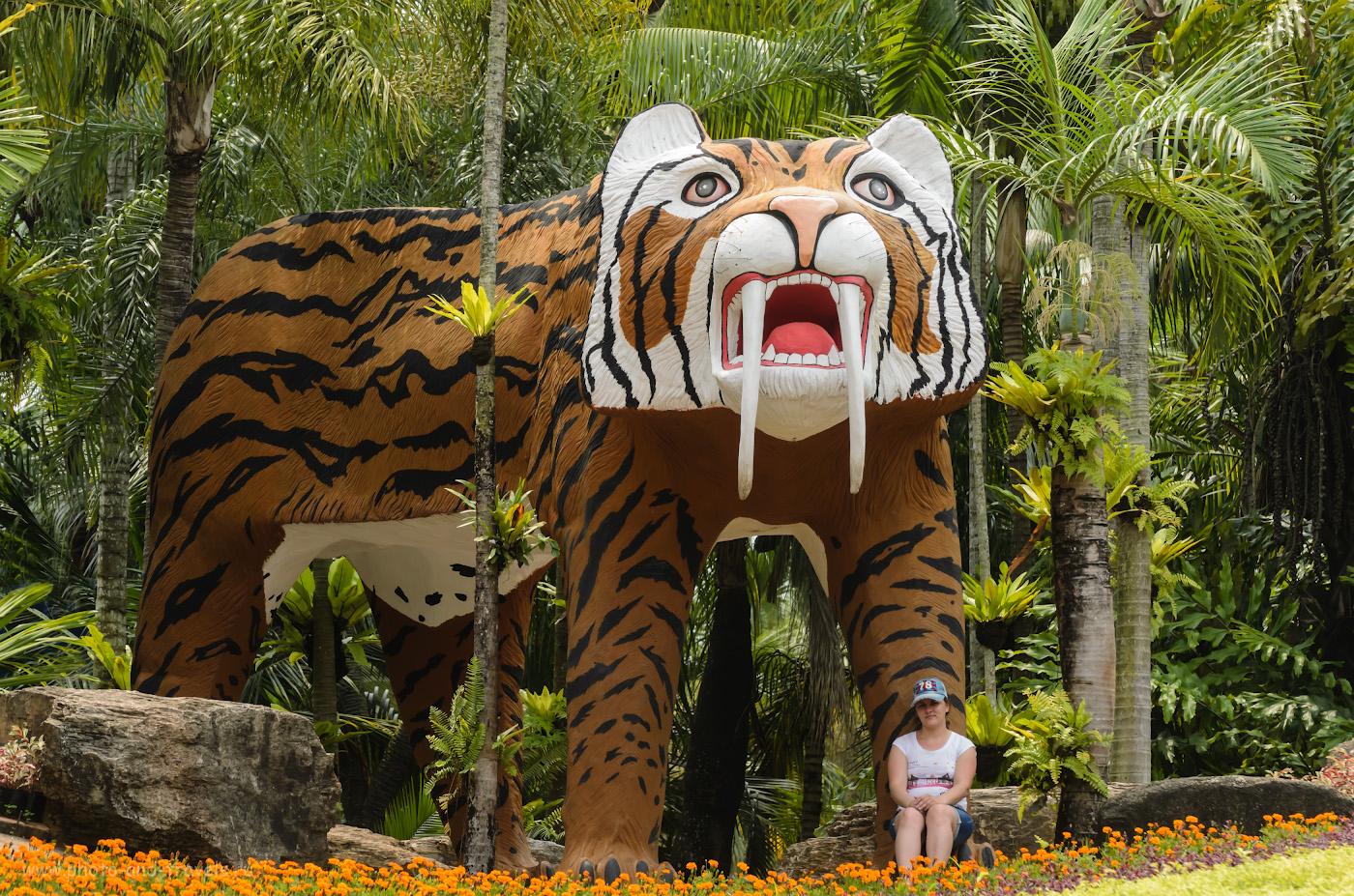14.Саблезубый тигр в зверинце Нонг Нуч (Nongnooch). Что интересного можно посетить в Паттайе. Отдых в Таиланде самостоятельно. Камера Nikon D5100 с объективом Nikon 70-300mm f/4.5-5.6G. Настройки: 1/1000 сек, 0 eV, приоритет диафрагмы, f/5, 135 мм, ISO 500.