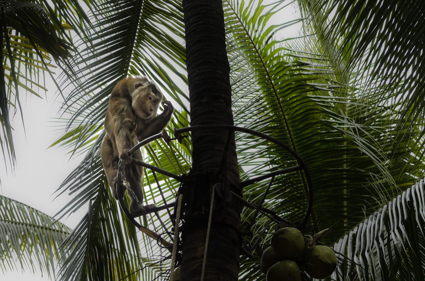 24. Тайский Ходорковский - узник ни за что... Зверинце в тропическом саду Нонг Нуч в Паттайе. Отзывы туристов об экскурсиях по интересным местам Таиланда.