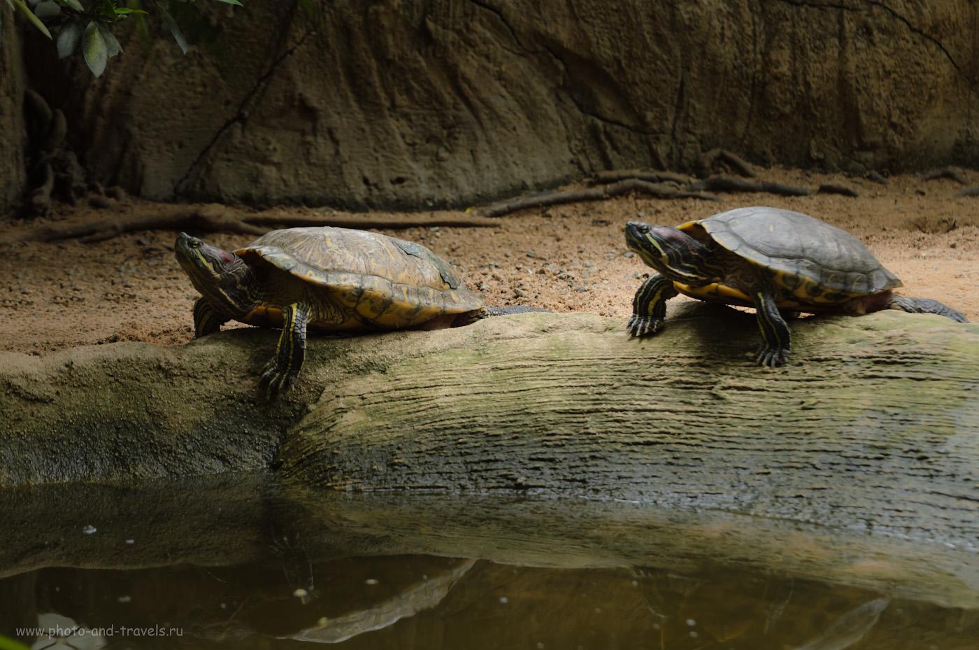 23. Отражения смотрелись бы интереснее. Тропический парк Нонг Нуч в Паттайе. Отзывы туристов о самостоятельной экскурсии во время отдыха в Таиланде.