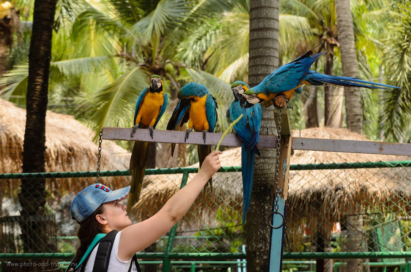 15. Покормить Ару в тропическом саду Нонг Нуч в Паттайе. Отзывы об отдыхе в Таиланде самостоятельно... (В=1/1000 сек, апертура f/4.5, ФР 70 мм, ISO 800)