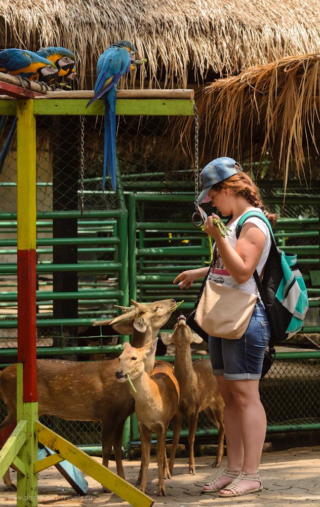 """16. Бабушка Мазай и олени с попугаями... Отчеты туристов о поездке в парк """"Nong Nooch Tropical Botanical Garden"""" в Паттайе самостоятельно. Вторая поездка в Таиланд."""