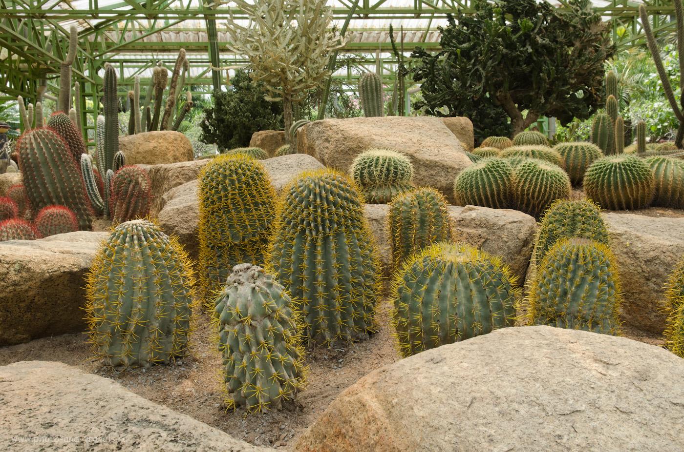 33. Кактусы в ботаническом саду Nong nooch. Какие интересные места можно посетить в Паттайе во время отдыха в Таиланде.
