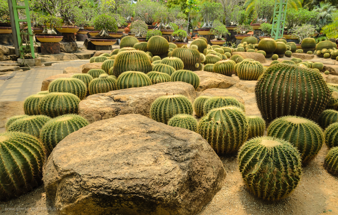 35. На колючей полянке. Отчет о поездке в сад мадам Нонг Нуч в Паттайе. Отдых в Таиланде дикарями.
