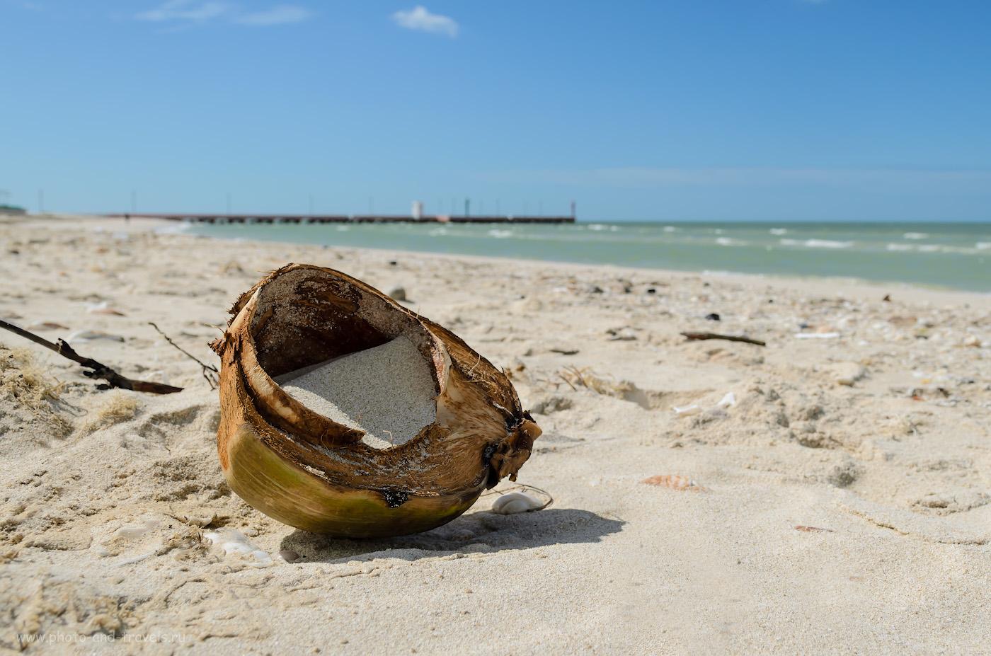 Фото 6. Мексика. Отзывы о поездке по стране самостоятельно. Селестун. Кокос в раю... 1/640, 8.0, 100, 18.