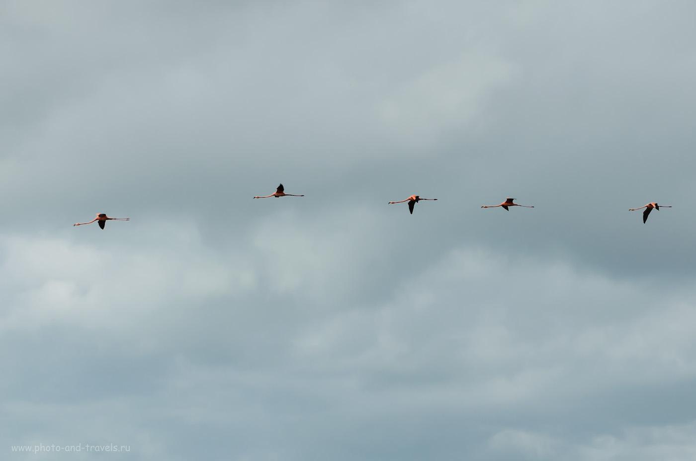 Снимок 11. Что лучше увидеть: синицу на руке или фламинго в небе? Отчеты туристов о поездке по Мексике на машине. Описание экскурсии в парк Сумидеро, где можно увидеть этих грационзных птиц. 1/250, 13.0, 100, 55.
