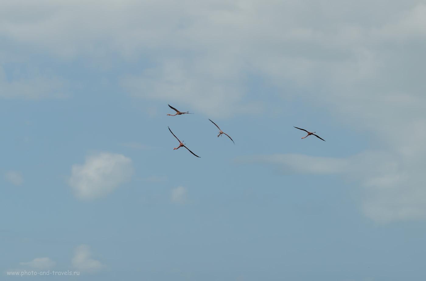 """Фото 9. Когда последний раз вы видели фламинго в небе? Мы повстречали их в заповеднике """"Reserva de la Biosfera Ría Celestún"""" во время самостоятельного путешествия из Канкуна по Юкотану на автомобиле. 1/200, 13.0, 100, 55."""