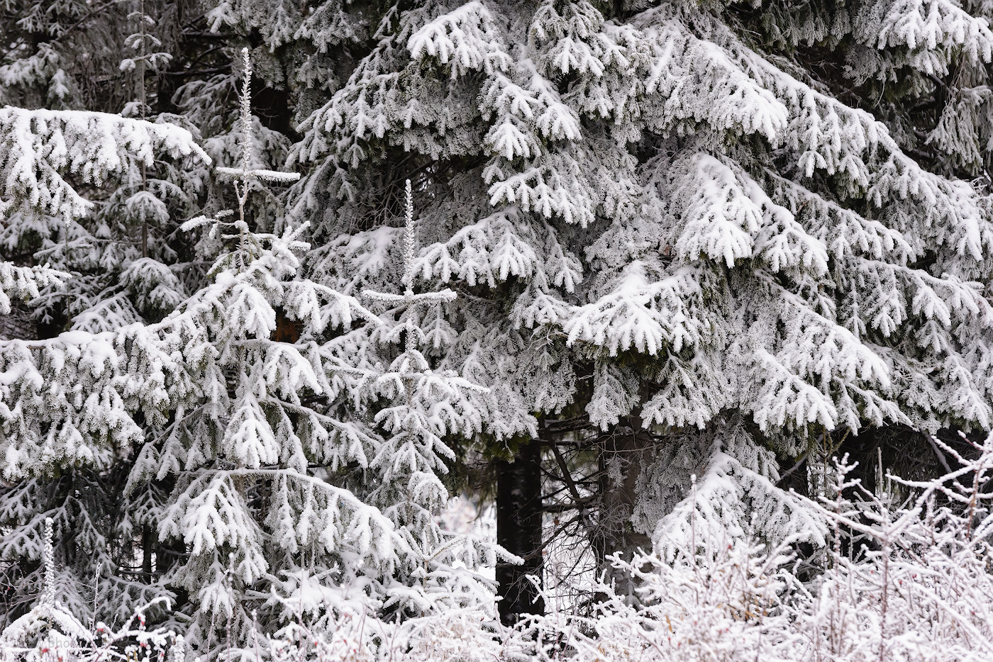 Фото 1. У водопада Плакун снега на деревьях почти не было. Ближе к Белой горе лес оделся в снежную шубу. Камера Nikon D610, объектив Nikon 70-200mm f/2.8. Параметры съемки: выдержка 1/400 секунды, экспокоррекция +0,33 EV, f/5.6, ISO 1600, ФР=165 мм.