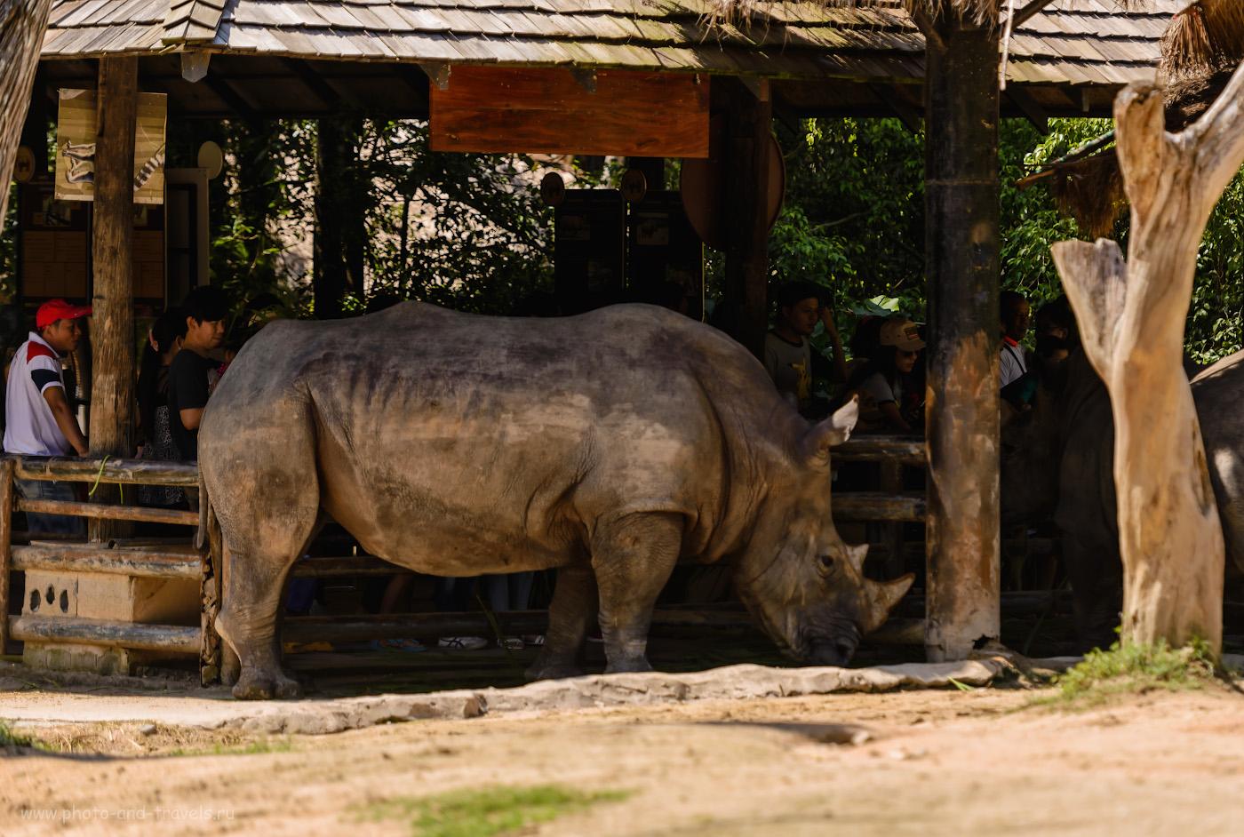 Фото 19. Носорог в зоопарке «Кхао-Кхео». Интересные экскурсии, куда можно поехать в Паттайе. Достопримечательности, которые можно посетить во время отдыха в Таиланде. 1/1000, -0.33, 2.8, 100, 145.