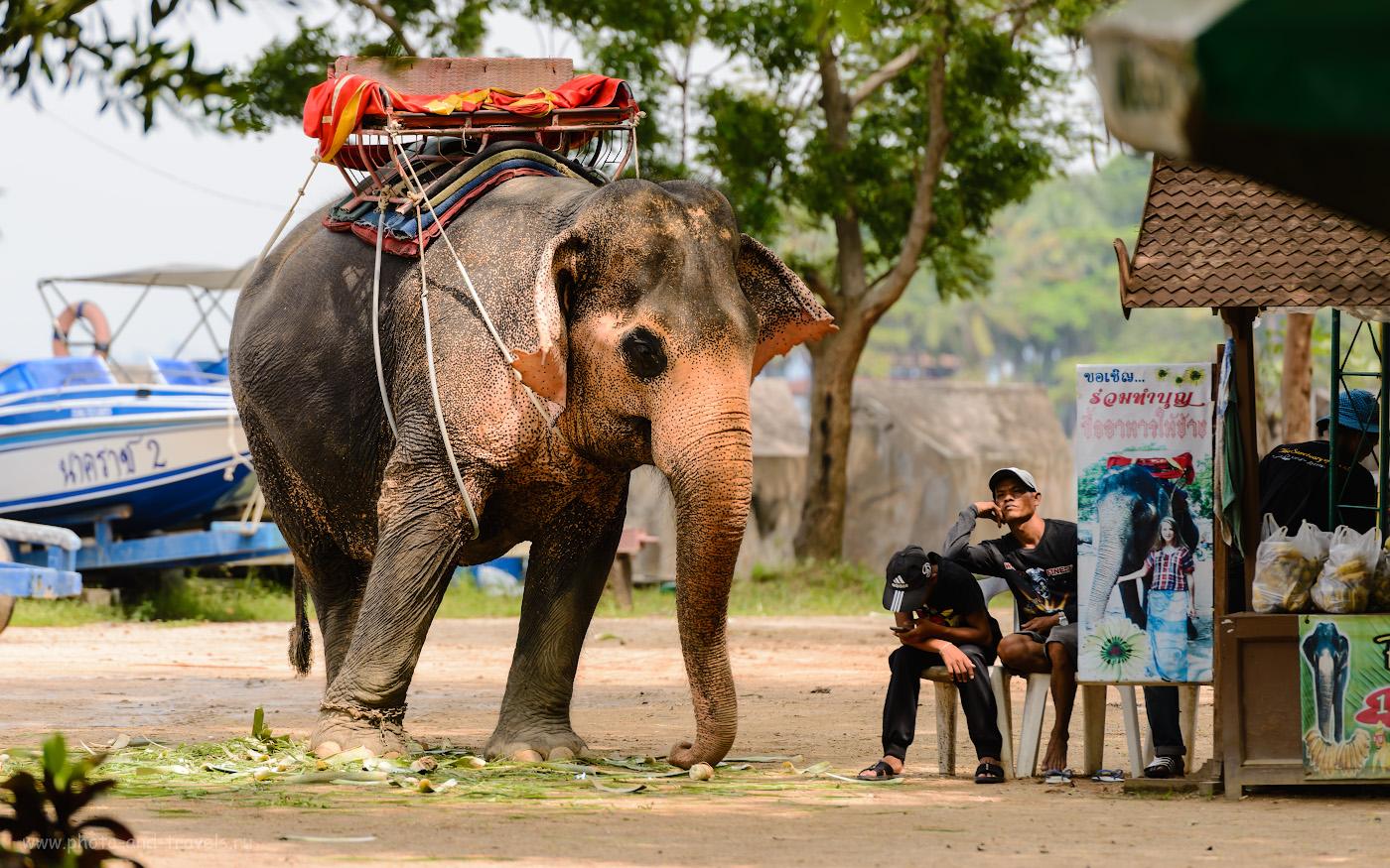 Фото 22. Около Храма Истины (Sanctuaryof Truth), как и во многих местах в Паттайе, можно прокатиться верхом на слоне. Советы туристам, собирающимся на отдых в Таиланд. 1/400, 4.0, 125, 200.
