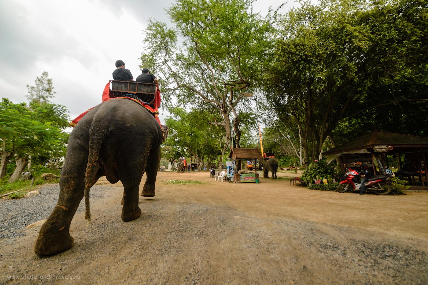 Фото 11. Катание туристов на слонах в парке около Храма Истины в Паттайе. Преимущества отдыха на этом курорте Таиланда. 1/400, 3.5, 360, 14.