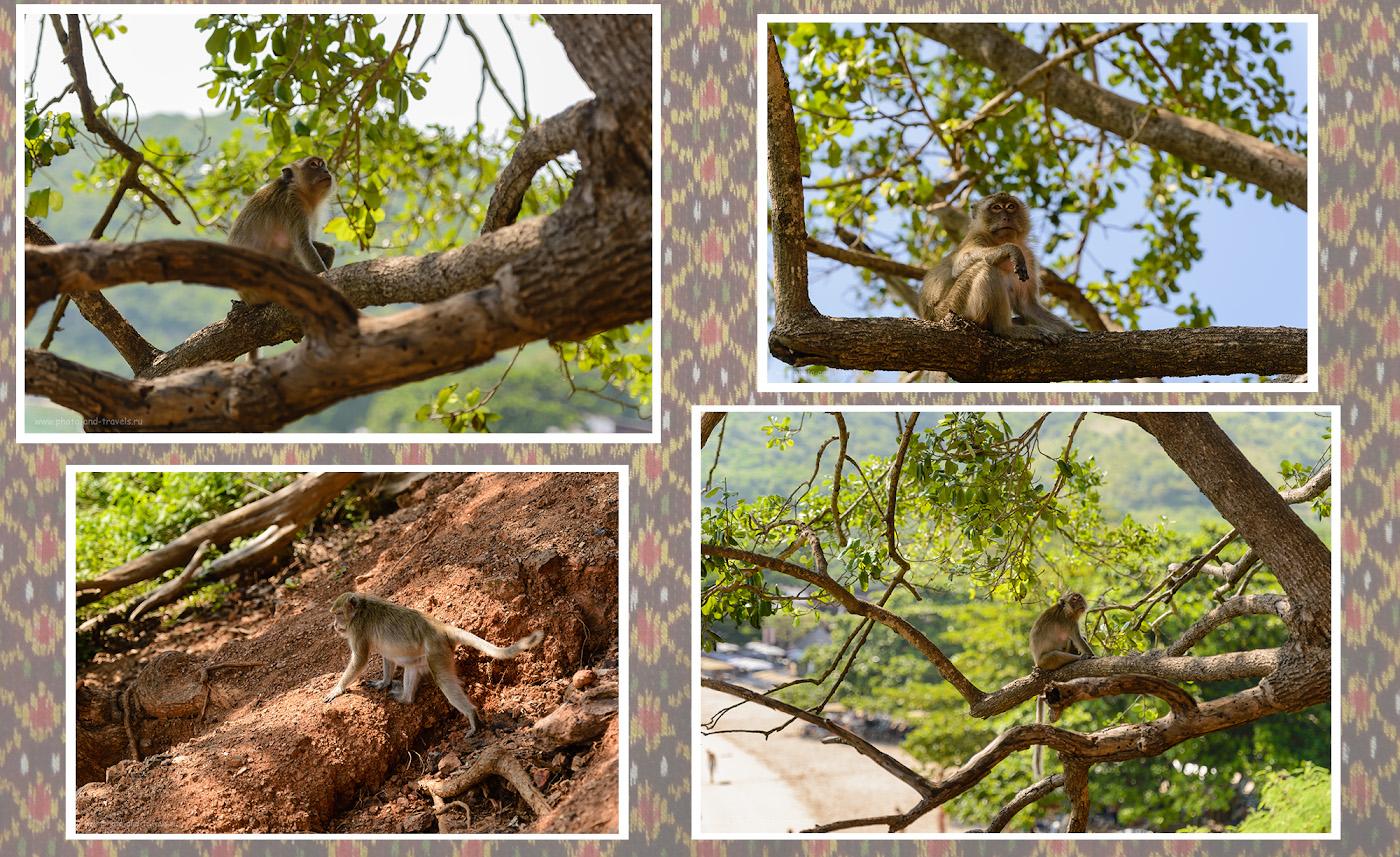 Фото 18. Будьте осторожны, фотографируя обезьян в Таиланде. Сценки на пляже Манки Бич острова Ко Лан, куда приезжают купаться туристы из Паттайи.
