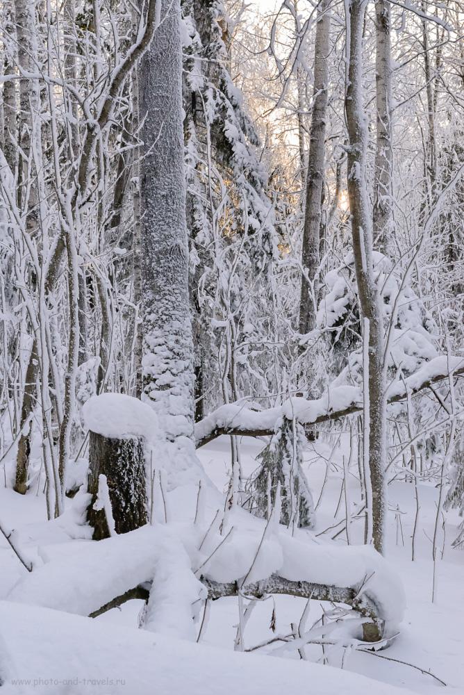Фото 4. Лес вдоль тропы на вершину Колпаков зимой. Отзывы туристов о походах в Пермском Крае. 1/100, +0.33, 16.0, 6400, 70.