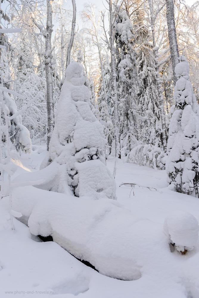Фотография 5. «Снегурочка» в лесной чаще на склоне Колпаков. Автомобильное путешествие в Пермский край зимой. 1/80, +0.67, 2.8, 100, 24.