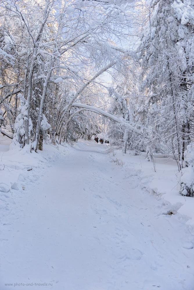 Фотография 7. Так выглядит тропа на вершину Колпаков зимой. Куда поехать в Пермском крае на выходные. 1/60, +0.67, 2.8, 100, 32.