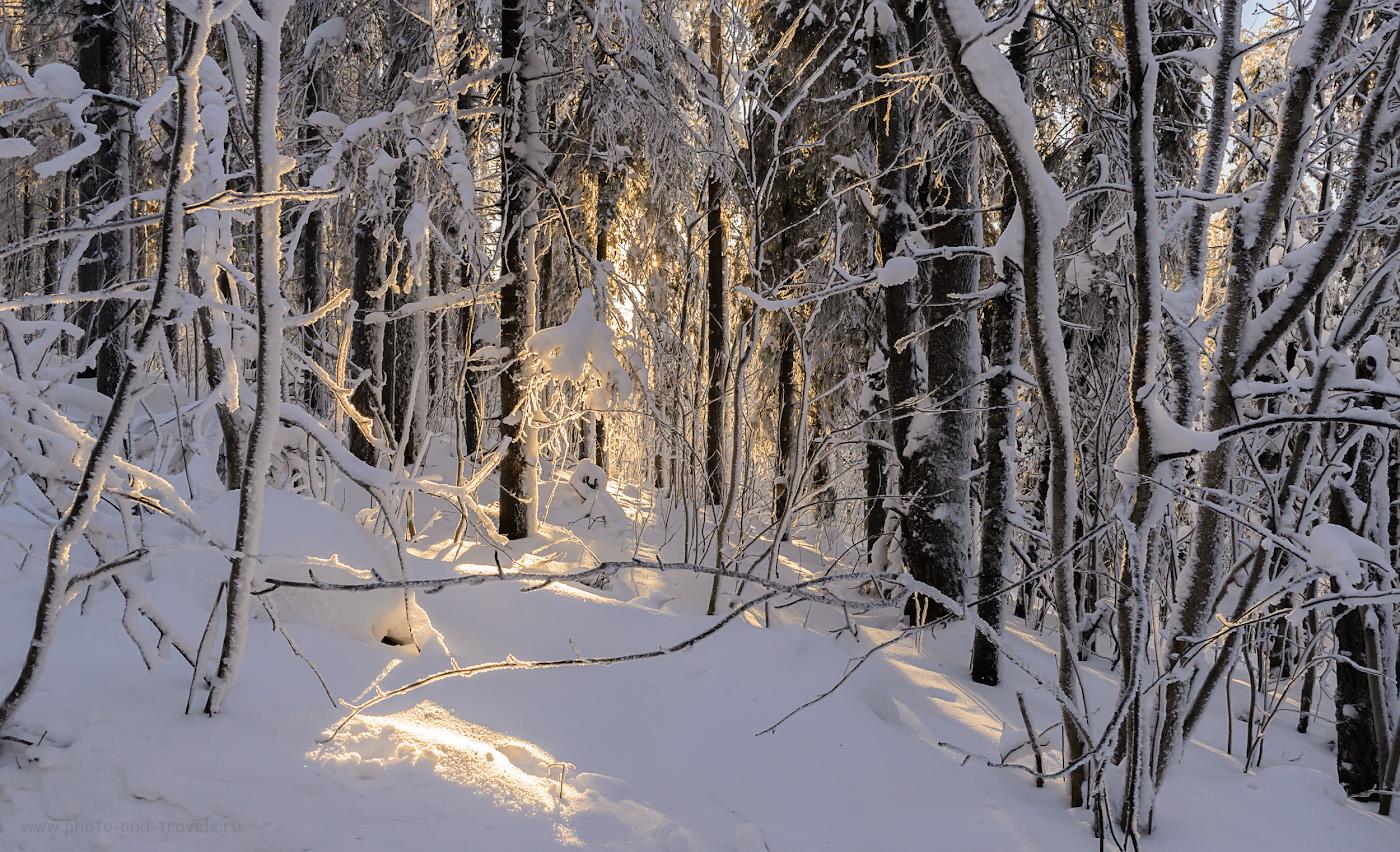 Фото 8. Солнце в зимнем лесу. Отзыв о восхождении на гору Колпаки в Горнозаводском районе Пермского края. 1/50, -0.33, 16.0, 720, 26.