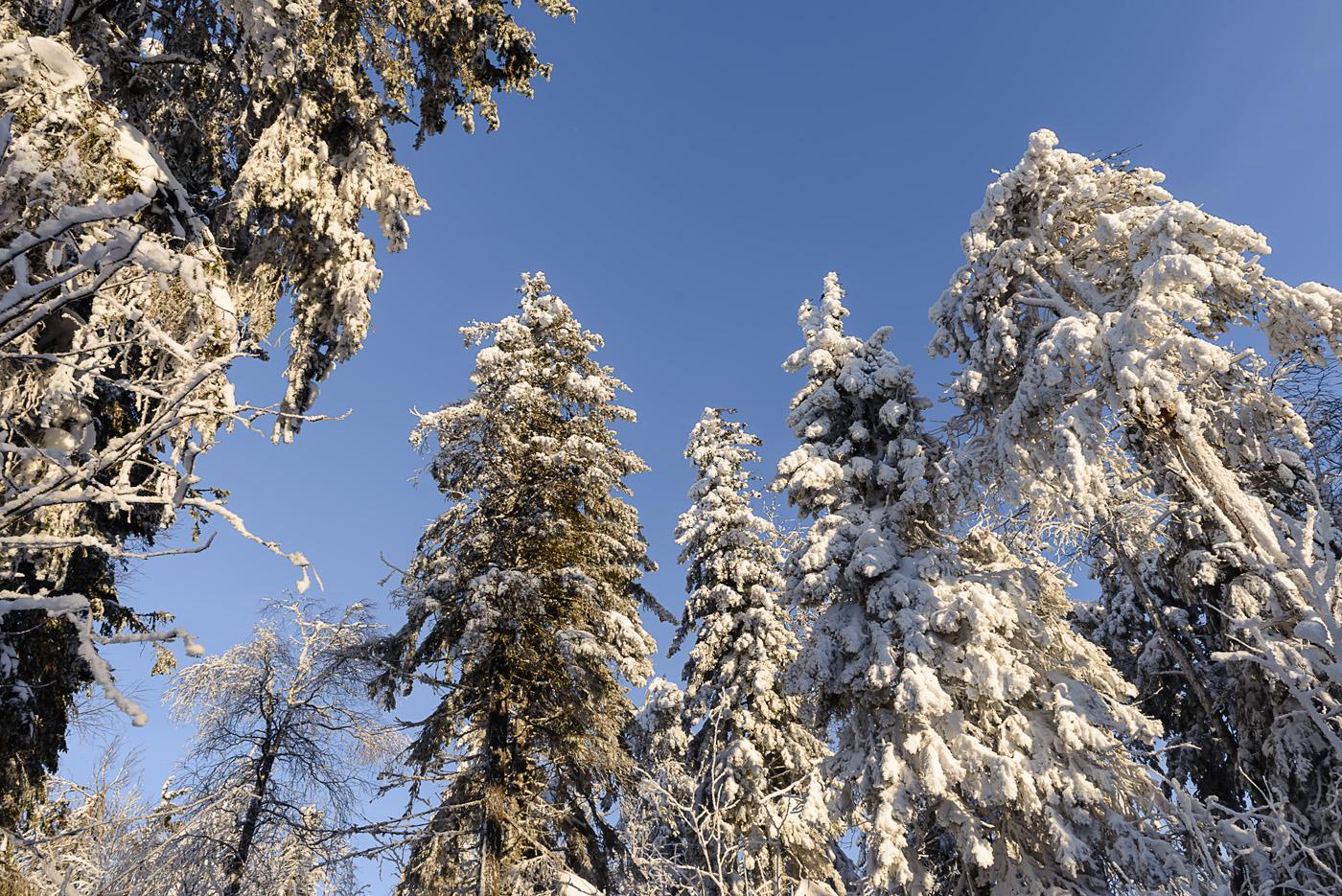 Фото 10. Лес и небо. Поход на Колпаки. Отзывы туристов об интересных местах в Пермском крае. 1/80, 8.0, 100, 24.