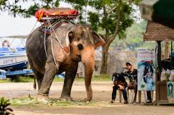 Predydushchaia pervaia glava otzyva ob otdykhe v Pattaie v tretii raz v oktiabre 2017 Pliusy i minusy kurorta Sovety po bezopasnosti dlia turistov otdykhaiushchikh v Tailande vpervye CHto pokushat