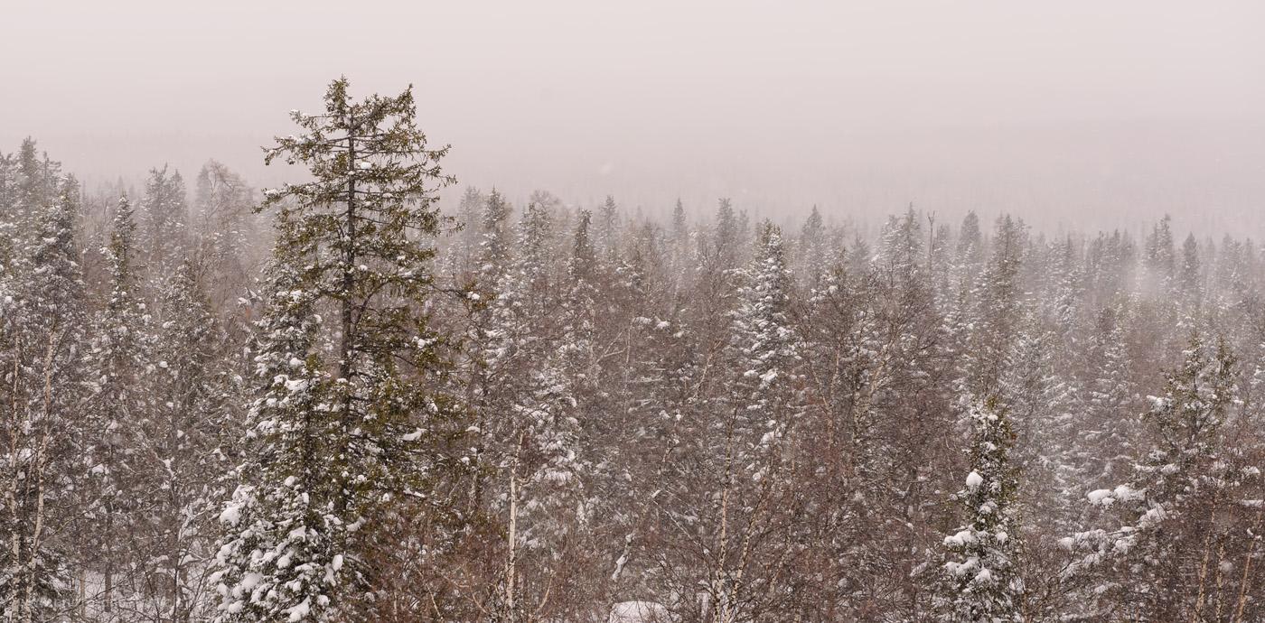 Снимок 12. Стоит ли ехать на Черную скалу в плохую погоду? Конечно, стоит! Отзыв о путешествии по Южном Уралу на машине. 1/400, +0.33, 8.0, 400, 70.
