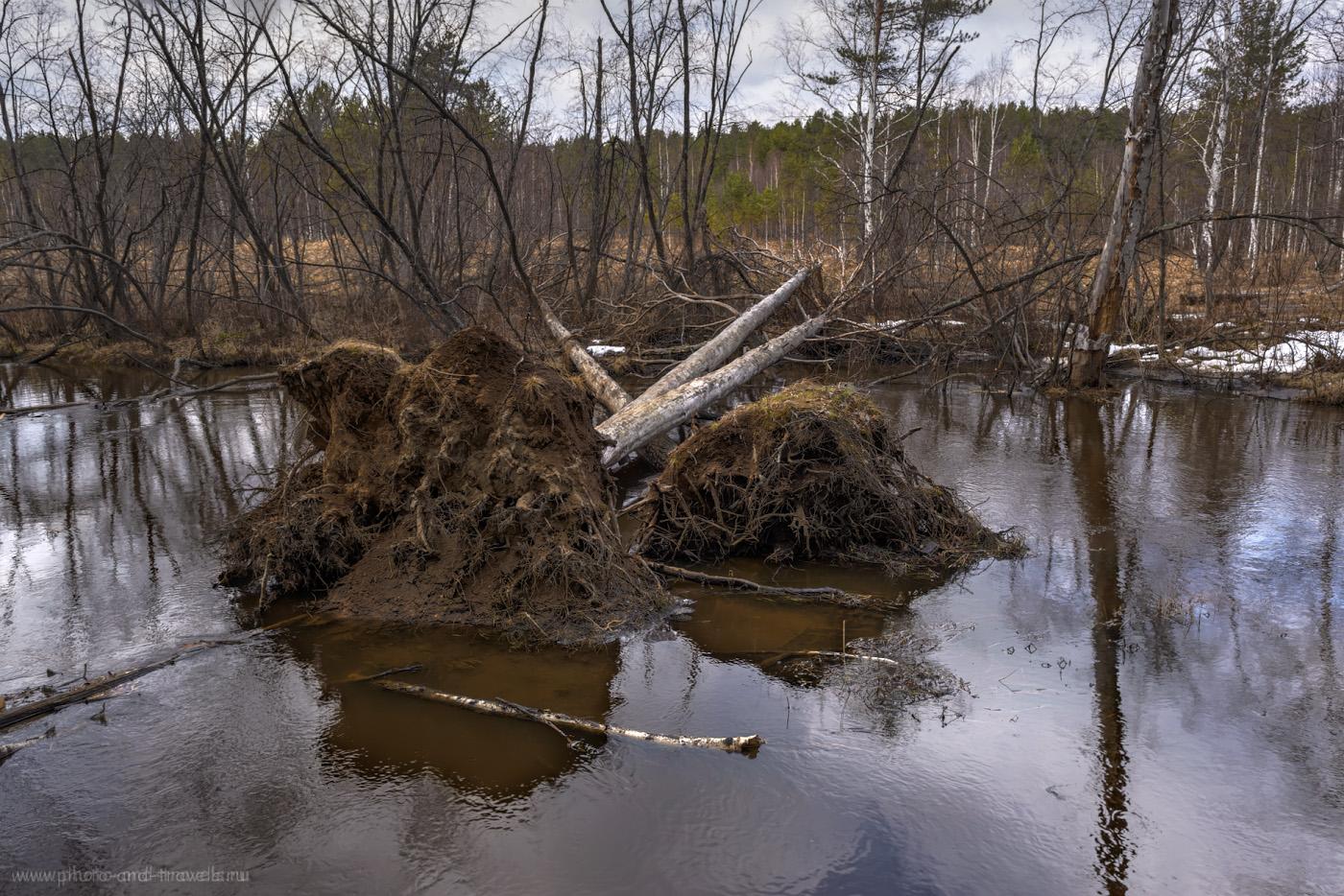 Фото 31. Упавшие деревья в речке Черная в парке «Бажовские места». HDR из трех кадров. 1/50, 8.0, 450, 24.