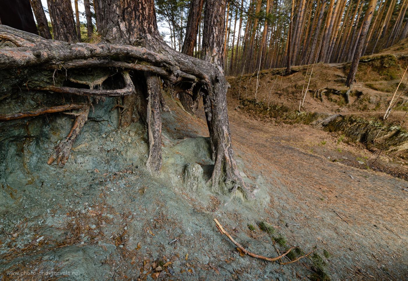Фото 36. Старый лес на берегу озера Тальков камень. 1/30, 8.0, 110, 14.