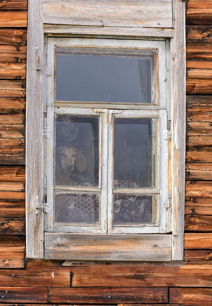 Фото 42. Бобик и Барбос просят тебя поделиться ссылкой на отчет о поездке по интересным местам Челябинской области в социальных сетях.Сделает, то, что они просят? 1/500, 4.0, 320, 240