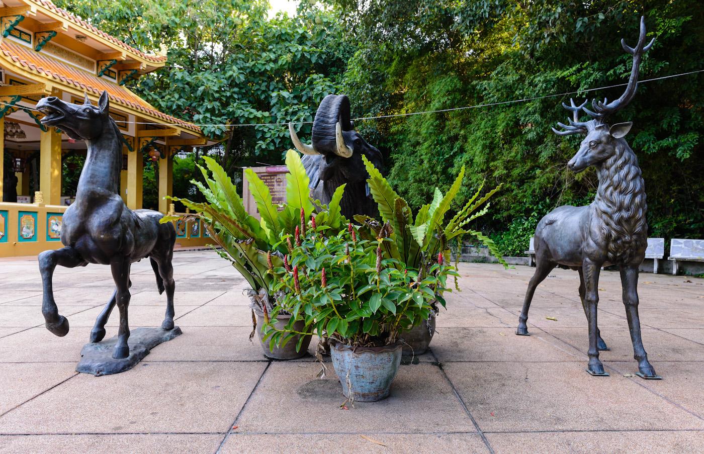 Снимок 8. Прямо зверинец на территории парка Wang Sam Sien. Отзыв, как мы поднялись на холм Пратамнак в Паттайе. Рассказы туристов о самостоятельном отдыхе в Таиланде. Что интересного можно увидеть рядом с Большим Буддой. 1/50, 8.0, 320, 24.