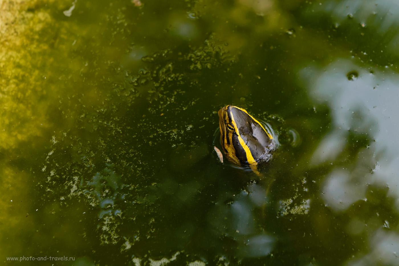 Фотография 15. Любопытный товарищ. Отзывы туристов о походе к Биг Будде в Паттайе. Самостоятельное путешествие в Таиланд. 1/160, -0.67, 5.0, 640, 70.